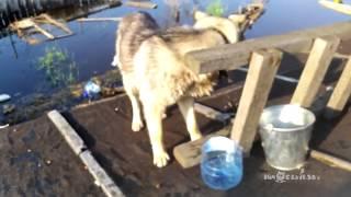 Спасение животных в Нижневартовске   Saving animals in Nizhnevartovsk