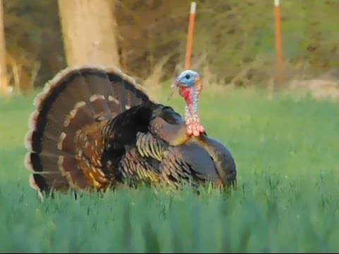 Holy Turkeys! Kansas Turkey Hunt