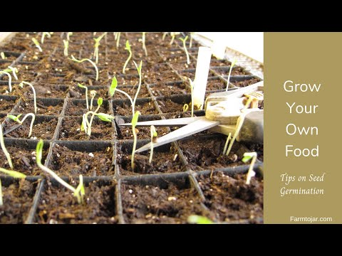 Grow your own food - Tomato & Vegetable Seed Germination Tips & Tools