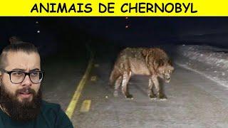 O que ACONTECEU com os animais de Chernobyl?