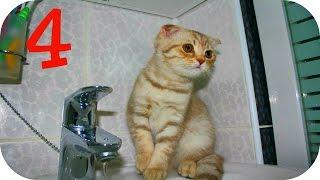 Смешные Кошки 2015 4 Веселая Видео Подборка Смешные Животные 2015