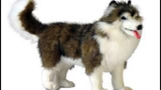 Giant Siberian Husky Stuffed Animals