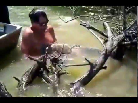 Tangkap Ikan Sembilang Seberat 60kg Dengan Tangan