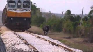 Tren de Carga - Cuba