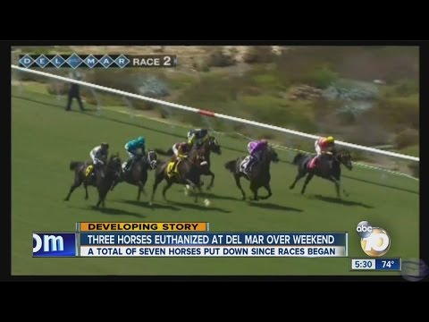 Seven horses euthanized in Del Mar's first eight days of rac