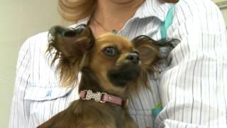 Реорганизация ветеринарной службы