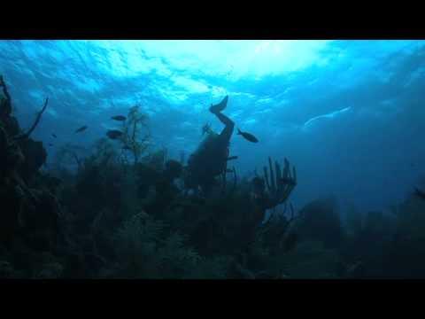 Healthy Reefs Mesoamerican Reef Survey
