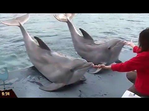 incontri con i delfini ang risalente Daan falsi insegnamenti