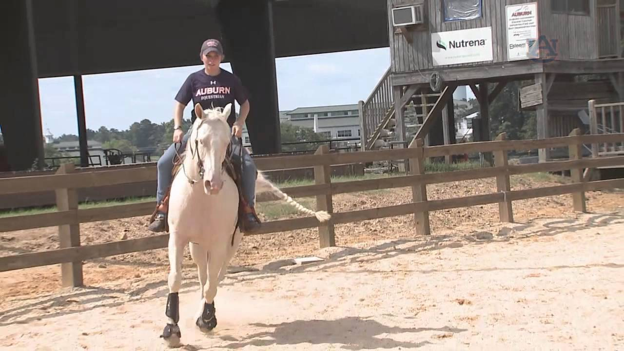 Auburn Equestrian First Day Of Practice Youtube