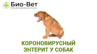 Короновирусный энтерит у собак. Ветеринарная клиника Био-Вет.