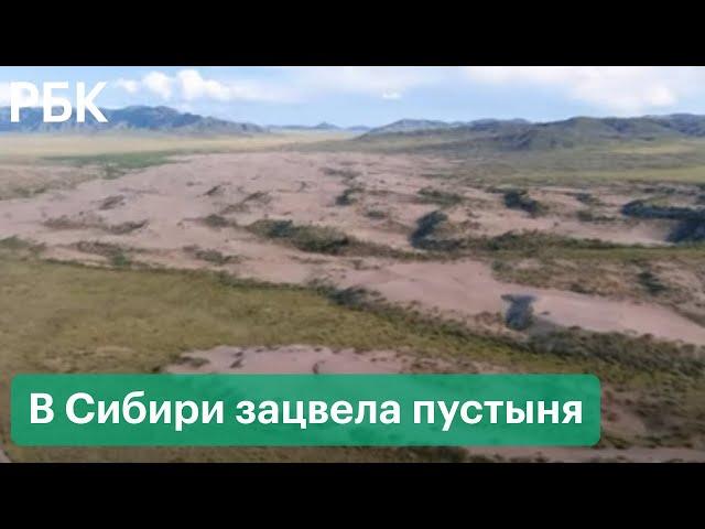 В Сибири цветет пустыня и тает вечная мерзлота. Как изменение климата становится заметным