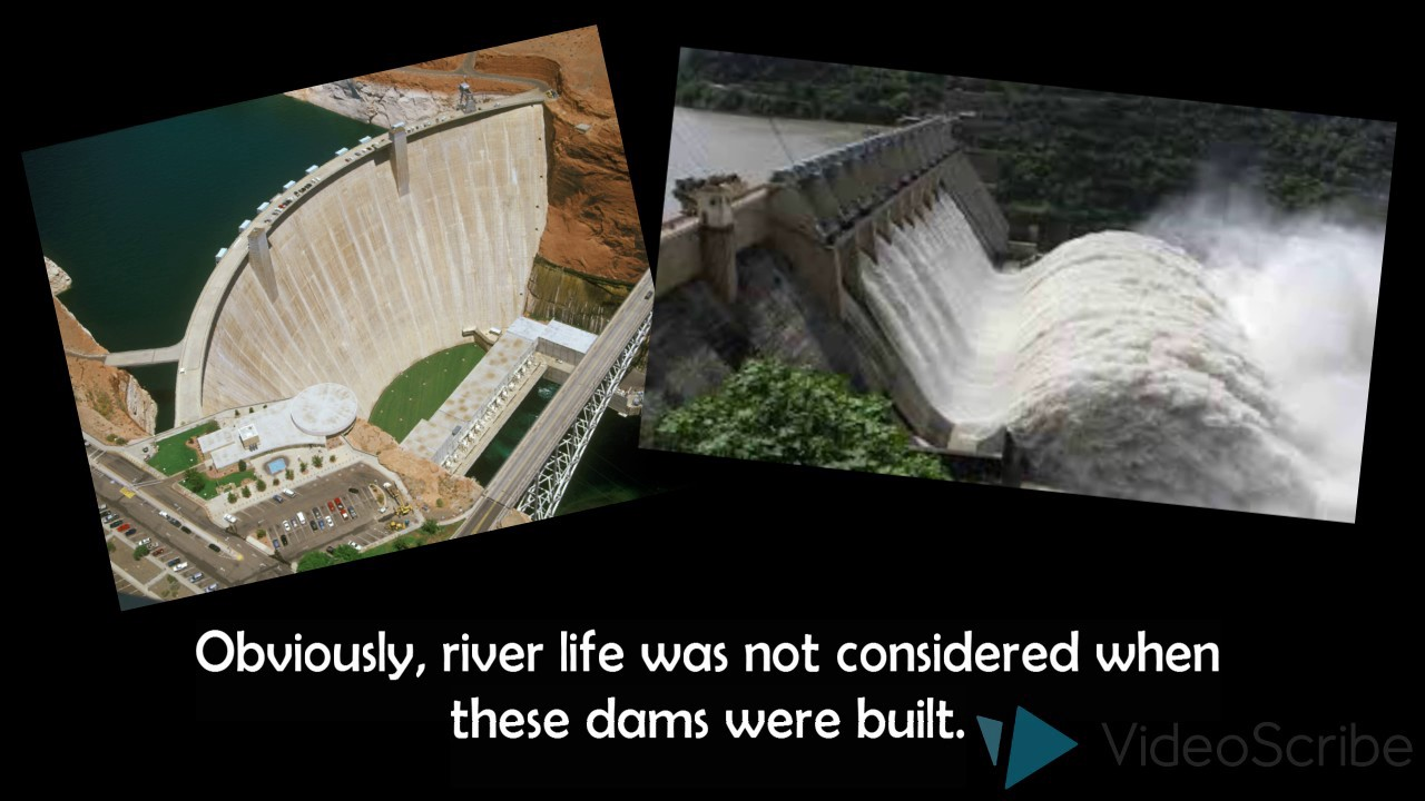 effects of dams Effects of elevated water temperature on fish and  fraley, 1979 harding, 1994) effects of dams on macroinvertebrate communities are.
