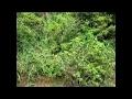 初夏の虫の鳴き声8min Nature Sound
