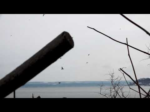 Diver Decoy Spread Tips | Cabela's Northern Flight