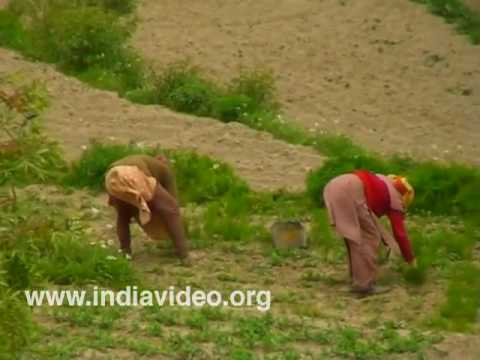 Farming in Himachal Pradesh