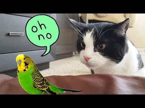 Hush! Don't move! I'll be quick!