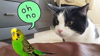 鳥…鳥さん……?プーシクと新たなお友だち、小鳥さんたちを紹介しよう