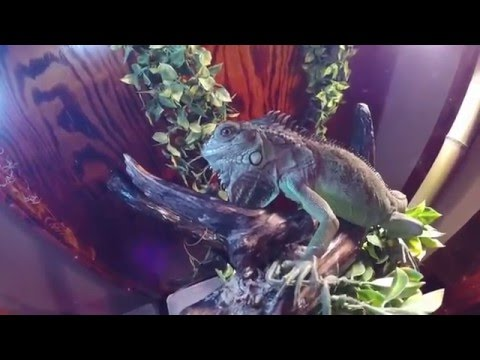 Reptile Room Tour (complete collection) March 2016