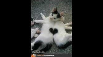 Lustige Katzen, Sprüche