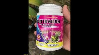 Thuốc Thailand Suntalaxyl Thành phần #METALAXYL chuyên diệt nấm thối
