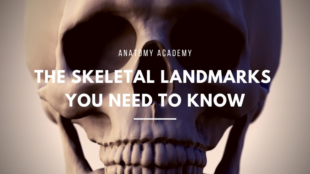 The Skeletal Landmarks You Need To Know - YouTube