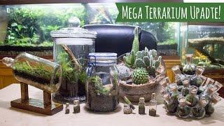12 Terrarium Mega Update & Channel Expectations (Thanks for 30k Subs!)