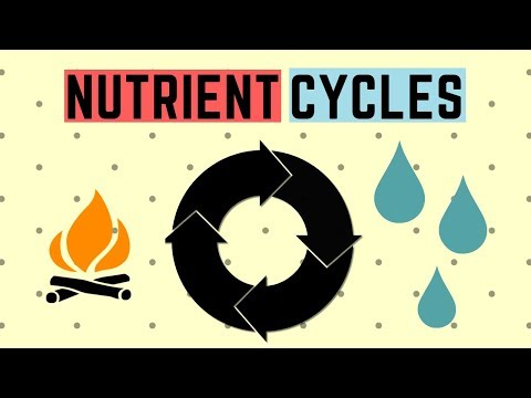 IGCSE BIOLOGY REVISION [Syllabus 20] - Nutrient Cycles