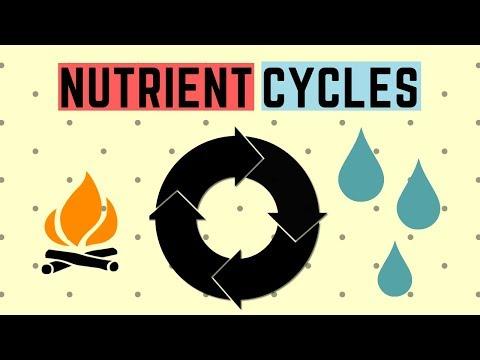IGCSE BIOLOGY REVISION [Syllabus 19] - Nutrient Cycles