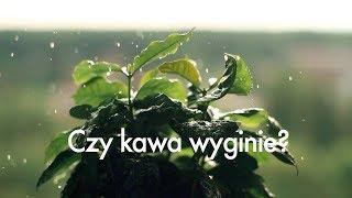 Czy KAWA wkrótce WYGINIE? Czajnikowy.pl