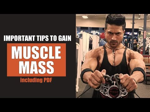 5 Ideas to Build Muscle Mass in an Optimal Rate