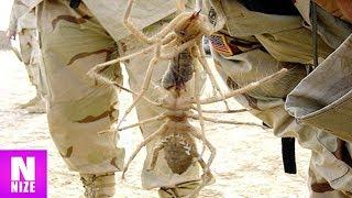 Die Unglaublichsten Spinnen Rekorde Der Welt!