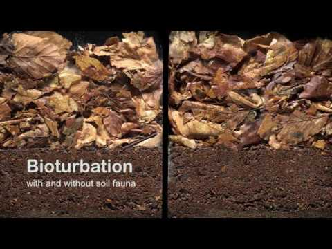 Bioturbation with and without soil fauna - YouTube
