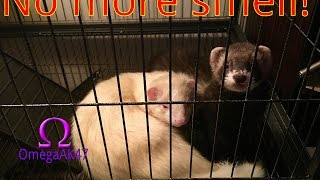 Cleaning the Ferret Cage | How to get rid of that Ferret SMELL