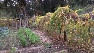 Self Sufficient Gardening - Fruit Trees And Winter Veggies, Permaculture Paradise!!!