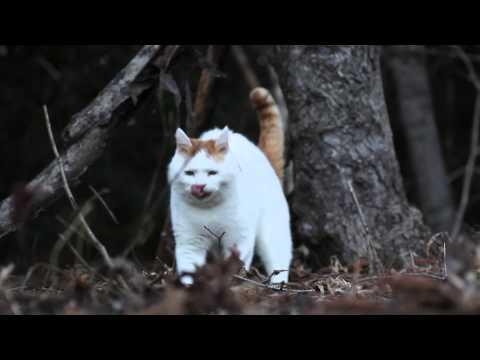 しろのさんぽ Walk the cat 2015#1