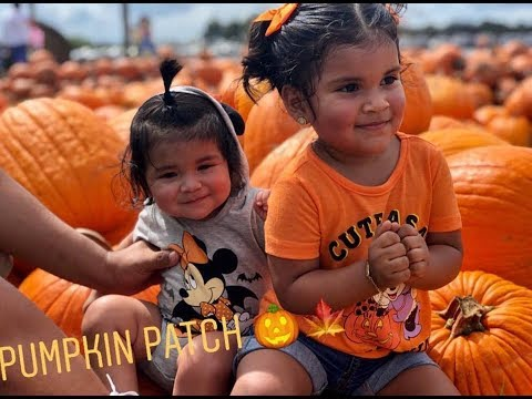 Pumpkin Patch|2018 🎃🍁