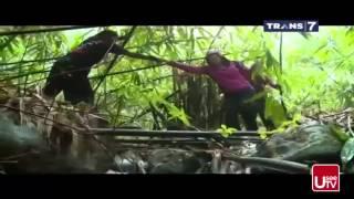 Download Video Goa Kelelawar dan King Cobra Berburu Trans7 MP3 3GP MP4