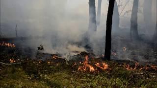 Pożar lasu w Jabłonnie