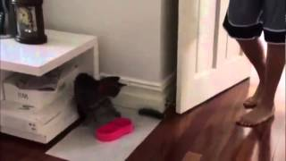 Коты против огурцов , смешно до слёз! Супер смешноё видео # 1 YouTube, СМОТРЕТЬ ДО КОНЦА!