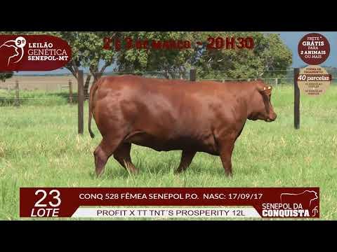 LOTE 23 CONQ 528