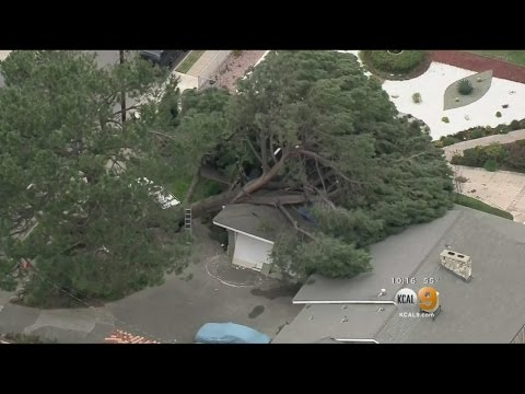 Tree Falls On Garage, Another Tree At Risk Of Crushing 2nd House In Pasadena