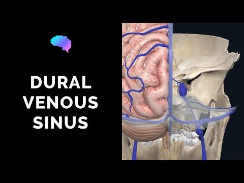 dural-venous-sinuses-(3d-anatomy-tutorial)