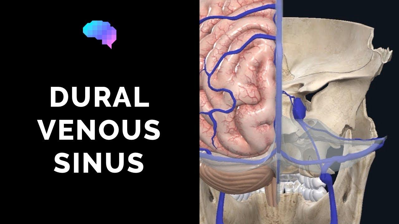 Venous Drainage of the Brain   Anatomy   Geeky Medics