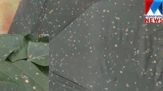 Yellow rain in Idukki | Manorama News