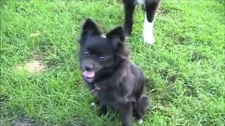 Remote Collar For Dog Training Geneva Il