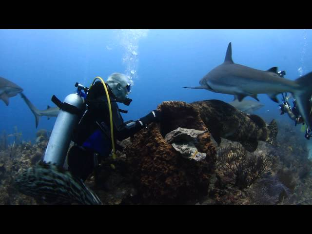 Impresionante Buceo Con Tiburones En Jardines De La Reina Cuba