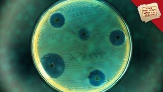 Superbugs: Infection Apocalypse