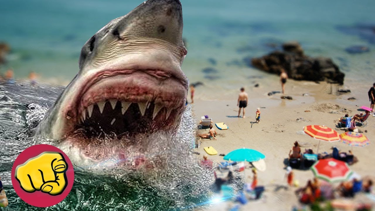 LOS TIBURONES más GRANDES del MUNDO, 10 Tiburones GIGANTES ????????????????