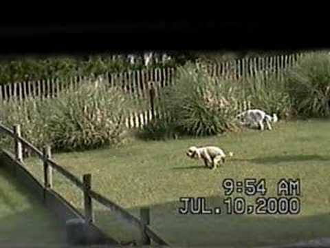 Dog Feces Flip in Virginia Beach