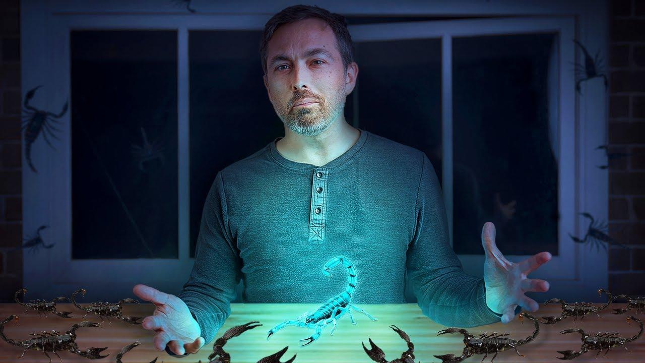 ¿Por Qué los Escorpiones Son Fluorescentes?